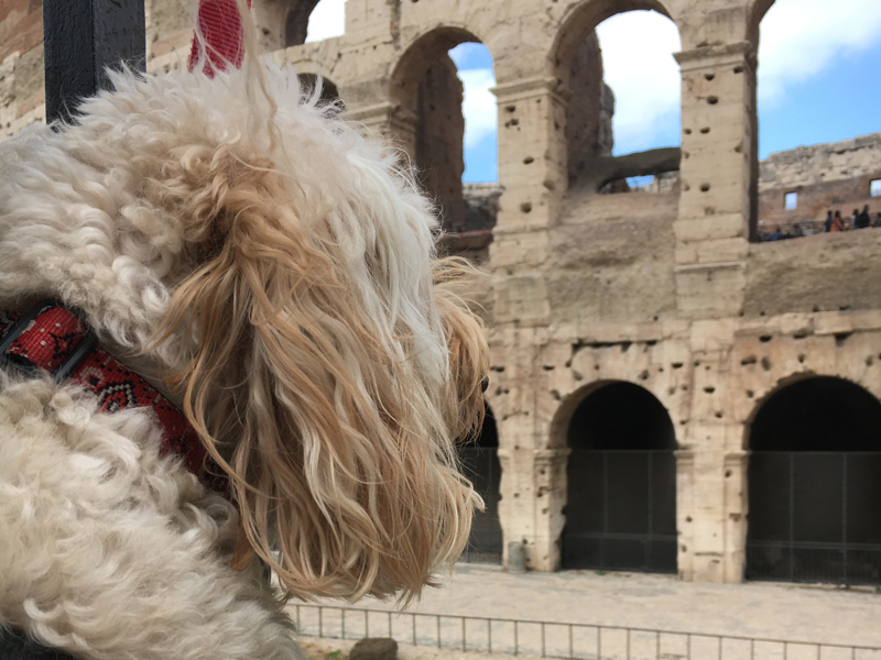 Woof guide to Rome – Travel tips for visiting Rome with your dog
